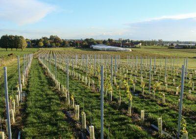 Onze wijngaard